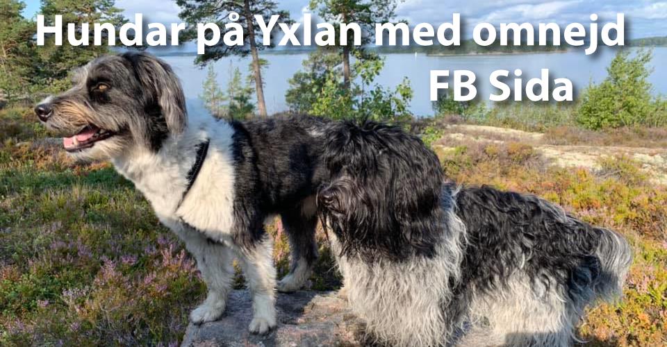 Hundar på Yxlan med omnejd